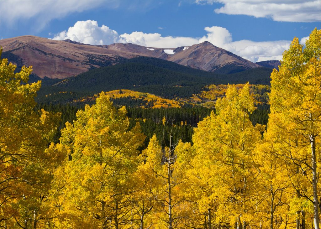 Yellow aspen leaves in the foreground of a beautiful Colorado fall scene with mountains in the background.